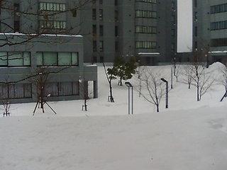snow1216a